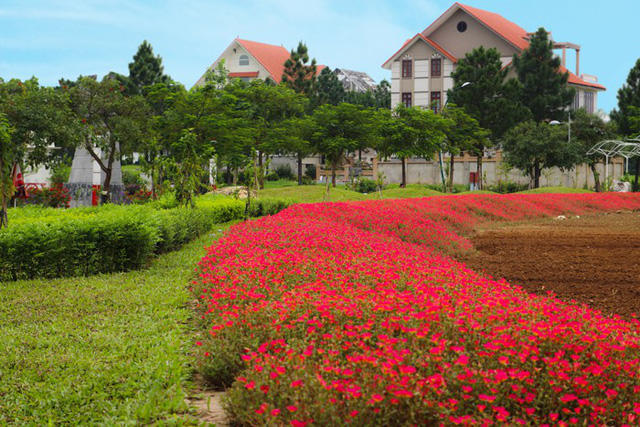 the phoenix garden da lat trong long ha noi 3 11